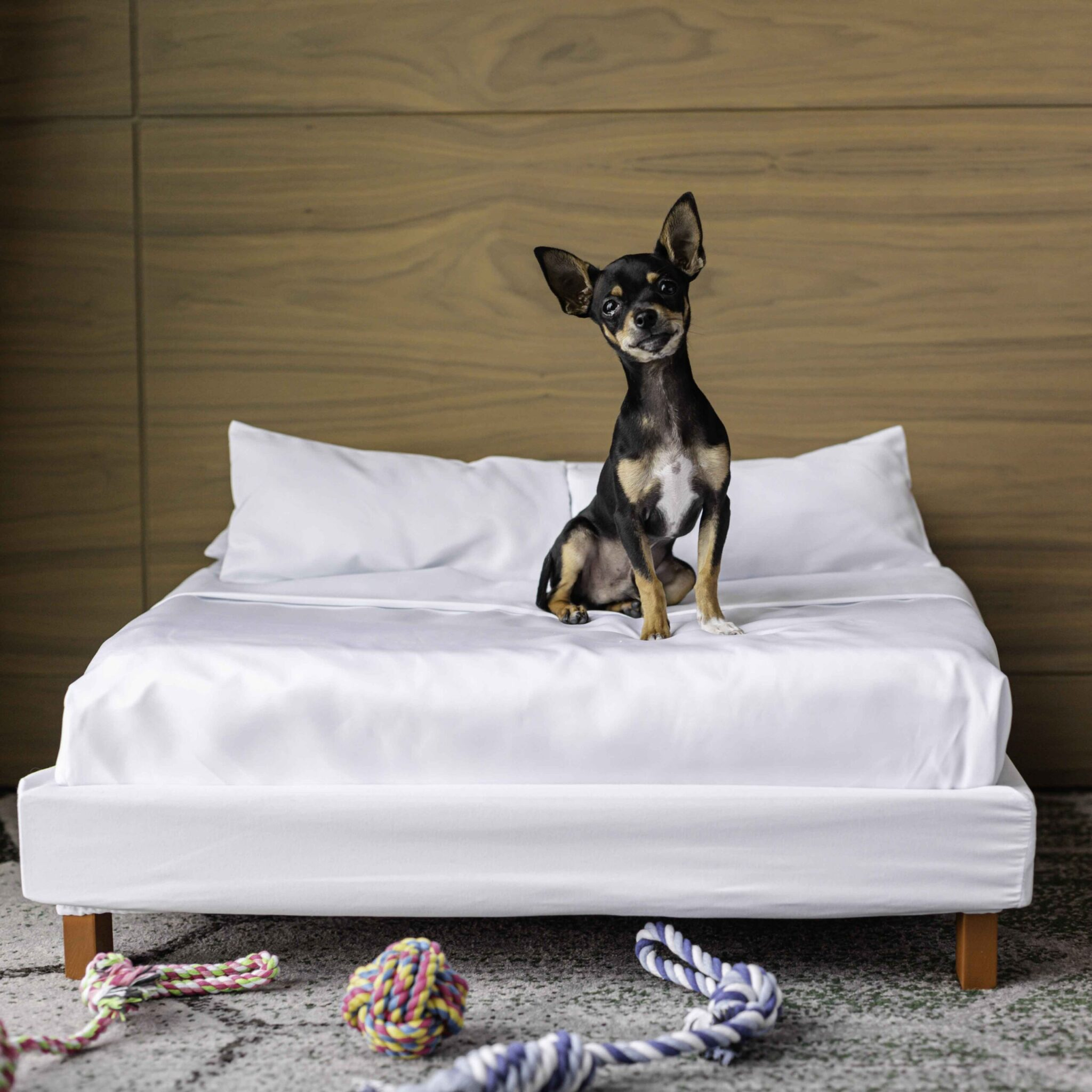Sofitel pet-friendly