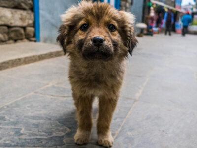 Perrito callejero